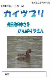 カイツブリ:舟田池の小さながんばりやさん