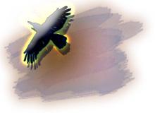 鳥が飛んでいるイラスト